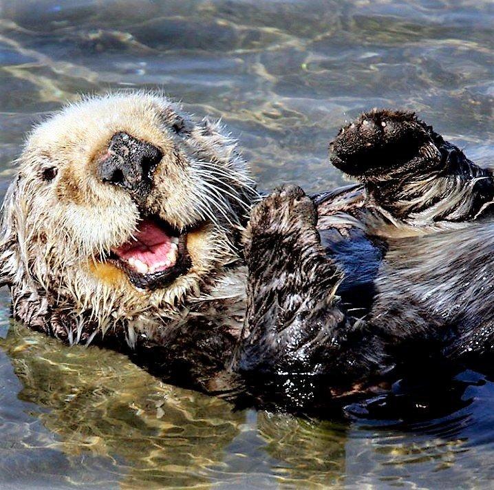 Kamtschatka Otter, Russland Reisen, Ochotskische Meer
