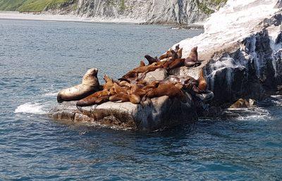 Kamtschatka Seelöwen Russkaja-Bucht