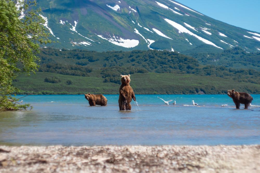 Kamtschatka Bären, Russland-Reisen