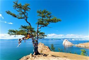 Insel Olchon am Baikalsee, Wunschbaum