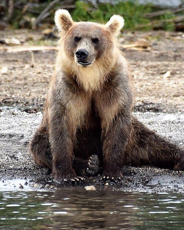 Bär - Erlebnisreisen, Kamtschatka