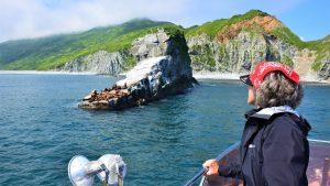 Seelöwen Kamtschatka Russland