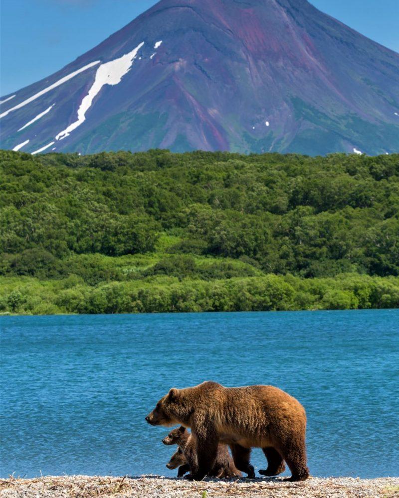 Bären Kamtschatka Reise, Kurilensee
